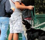 170910-exposicion-canina-san-felices-012