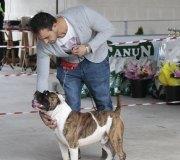 170910-exposicion-canina-san-felices-021