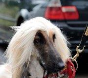 170910-exposicion-canina-san-felices-035