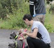 170910-exposicion-canina-san-felices-041