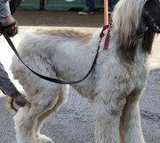 170910-exposicion-canina-san-felices-055