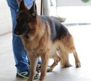 170910-exposicion-canina-san-felices-061