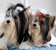 170910-exposicion-canina-san-felices-067