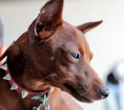 170910-exposicion-canina-san-felices-075