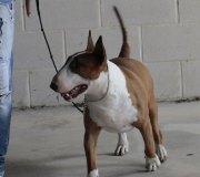 170910-exposicion-canina-san-felices-078