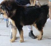 170910-exposicion-canina-san-felices-083
