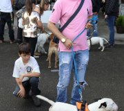 170910-exposicion-canina-san-felices-096