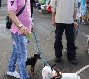 170910-exposicion-canina-san-felices-101