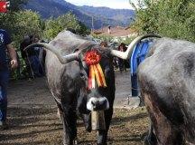 181103-feria-ganado-cieza-159