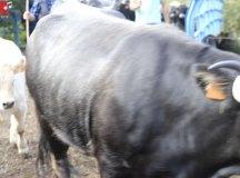 181103-feria-ganado-cieza-200