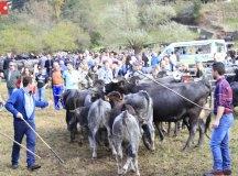 181103-feria-ganado-cieza-210