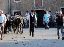 181118-feria-ganado-san-felices-013