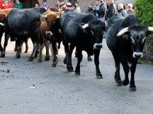 181118-feria-ganado-san-felices-028