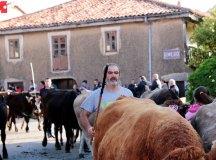 181118-feria-ganado-san-felices-048