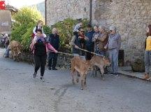 181118-feria-ganado-san-felices-065