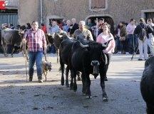 181118-feria-ganado-san-felices-182